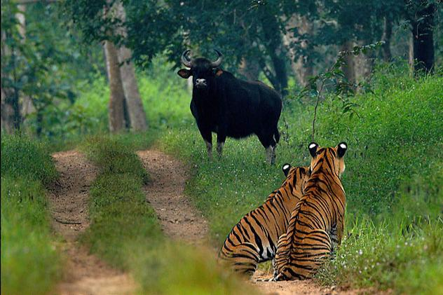 image of Bhadra Tiger Reserve